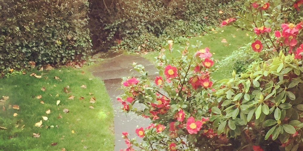 Roses in Early Winter, Eugene Oregon